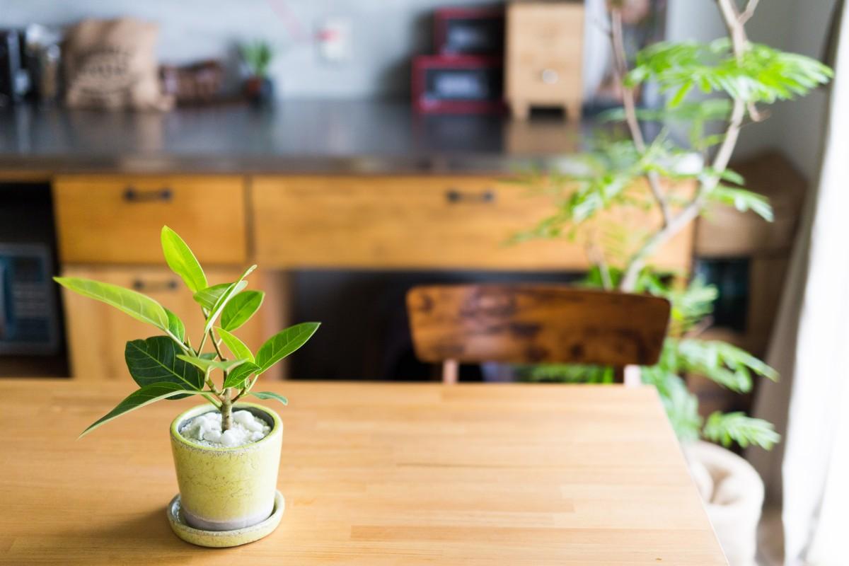 グリーン&観葉植物と、暮らそう。━リノベーション事例8選━